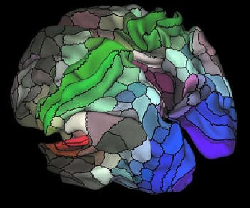 νέος χάρτης του ανθρώπινου εγκεφάλου