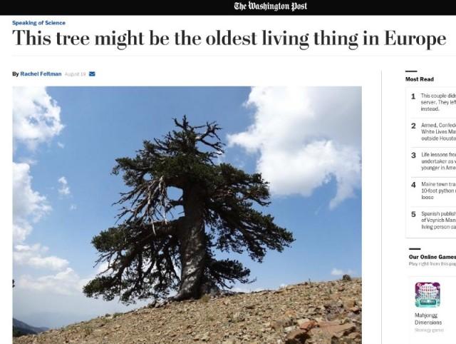 oldest_tree